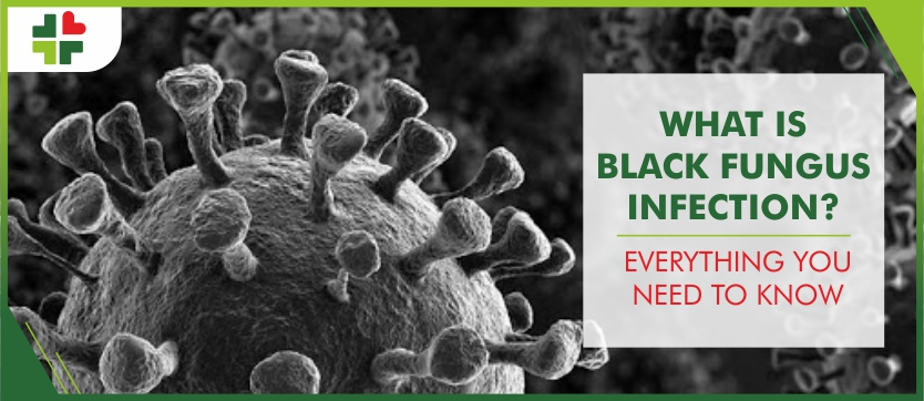What is Black Fungus Infection? Everything you need to know